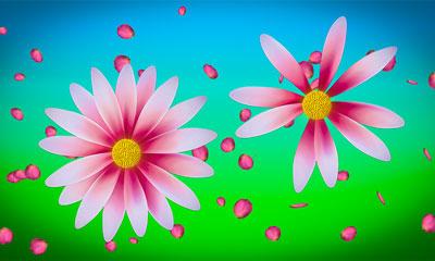 Blume - Liebt er mich oder Liebt sie mich?